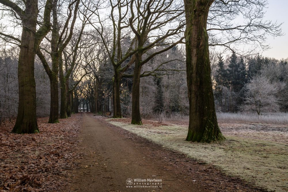 Photo in Landscape #mist #limburg #noord-limburg #venray #annaterrein #annapark #nature #winter #frost #forest #trees #path