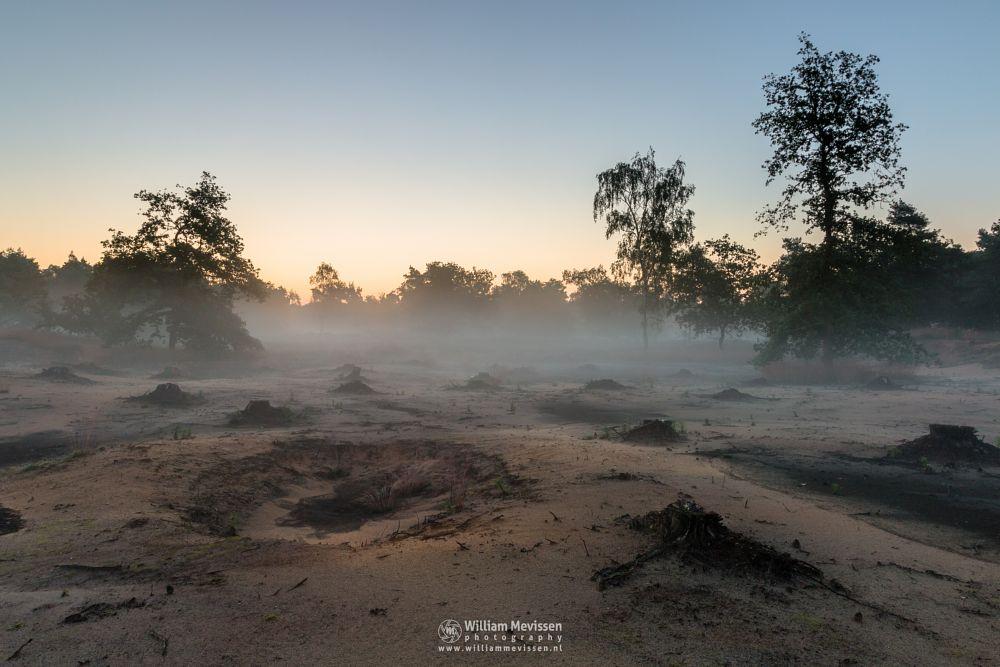 Photo in Landscape #boshuizerbergen #boschhuizerbergen #limburg #noord-limburg #venray #nature #forest #sand #shifting sand #netherlands #pine #sunrise #mist #fog