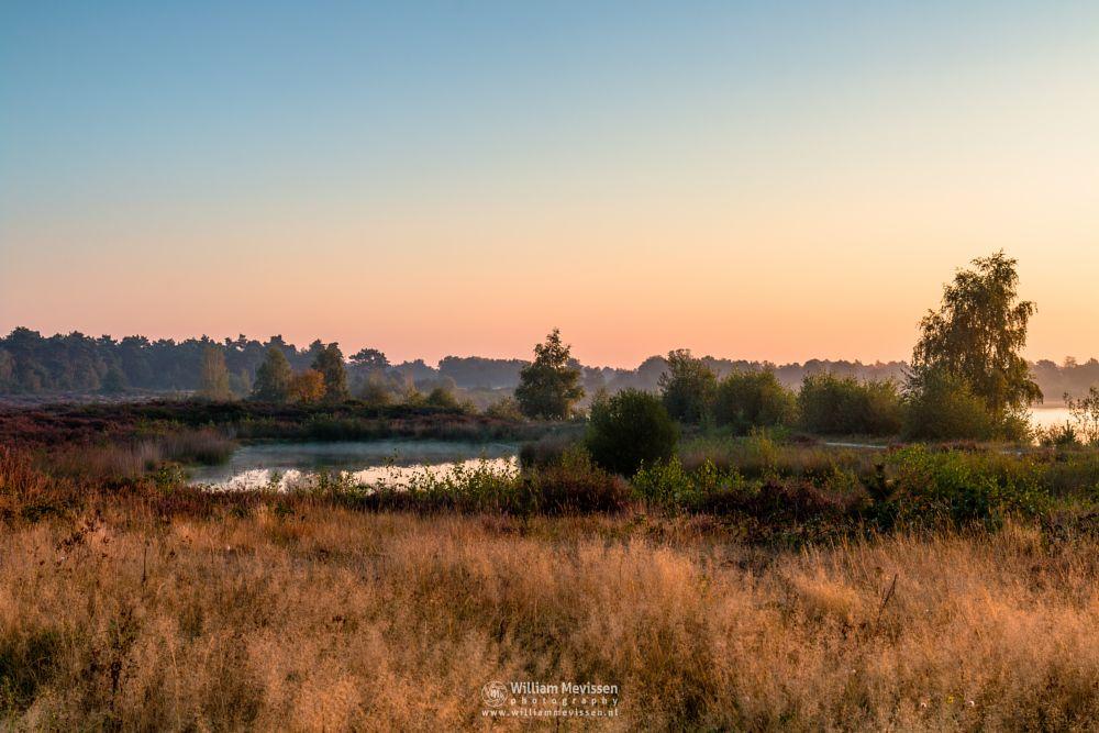 Photo in Landscape #trees #pine #pine forest #forest #lake #reindersmeer #maasduinen #limburg #noord-limburg #well #national park #nature #green #sunrise #colors #light #serene #view #heather #fen #mist #mood