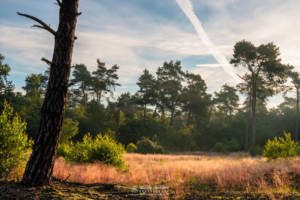 Photo in Nature #boshuizerbergen #boschhuizerbergen #limburg #noord-limburg #venray #nature #nature reserve #forest #woods #pine #pine forest #sunrise #green #light #sunlight #colors #colorful #oostrum #tree #trees #rays