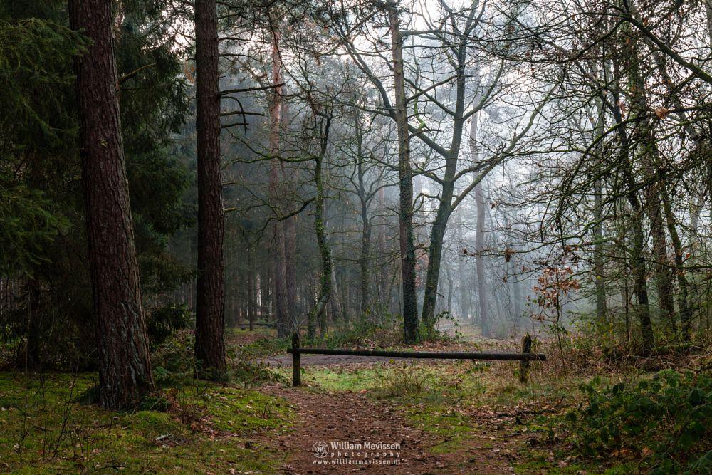 Photo in Nature #geijsteren #venray #oostrum #landgoed geijsteren #limburg #noord-limburg #nature #forest #woods #geysteren #winter #trees #path #mood #mist