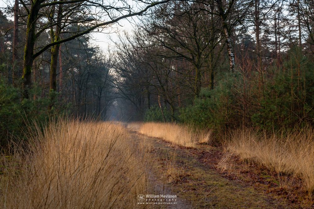 Photo in Nature #venray #venray merselo #overloon #forest #nature #limburg #noord-limburg #woods #ballonzuilbossen #ballonzuilbos #winter #trees #path