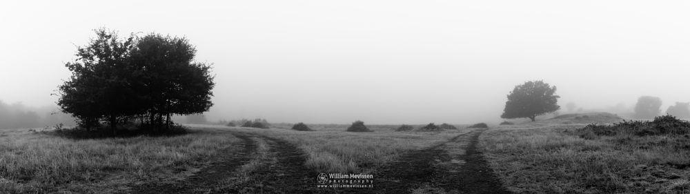 Photo in Black and White #bergerheide #forest #maasduinen #limburg #noord-limburg #nieuw-bergen #bergen #nature #light #autumn #mist #fog #mood #decisions #blackandwhite #bw