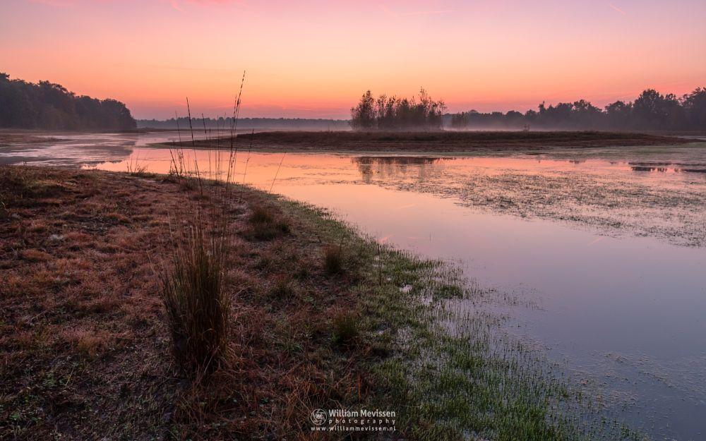 Photo in Landscape #bergerheide #forest #maasduinen #limburg #nieuw-bergen #bergen #noord-limburg #nature #mist #mood #autumn #twilight #sunrise #lelieven #grasses