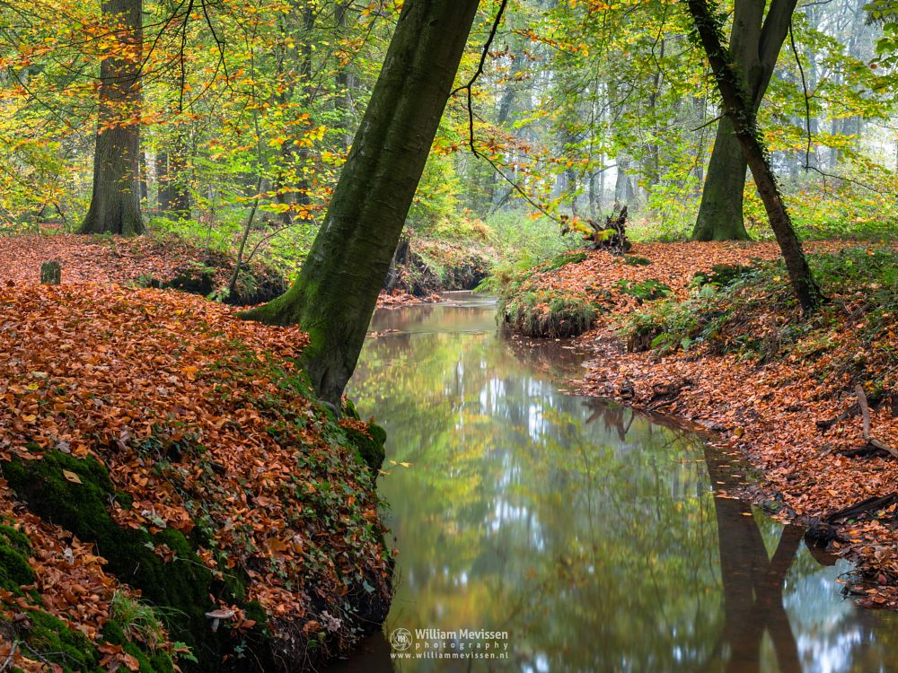 Photo in Landscape #geijsteren #venray #oostrum #limburg #nature #landgoed geijsteren #forest #brook #le #oostrumse beek #meandering #trees