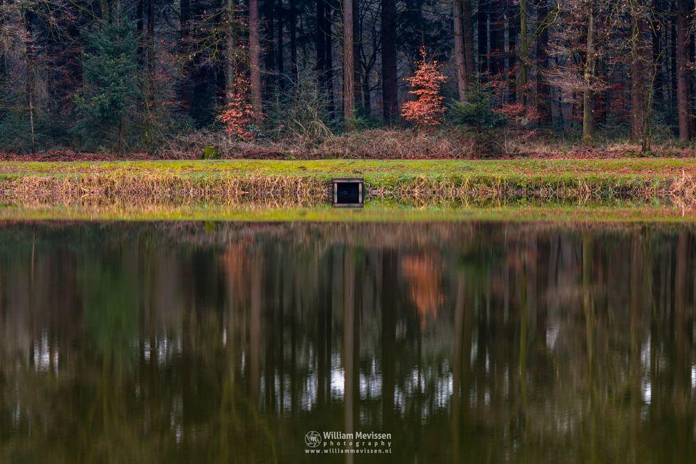Photo in Nature #venray #merselo #overloon #forest #ballonzuil #limburg #noord-limburg #nature #ballonzuilbossen #woods #ballonzuilbos #fishpond #reflections #autumn #trees