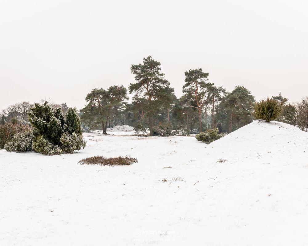 Photo in Landscape #boshuizerbergen #boschhuizerbergen #winter #snow #netherlands #forest #winterscape #trees #venray #nature #noord-limburg #limburg #woods #winterlandscape