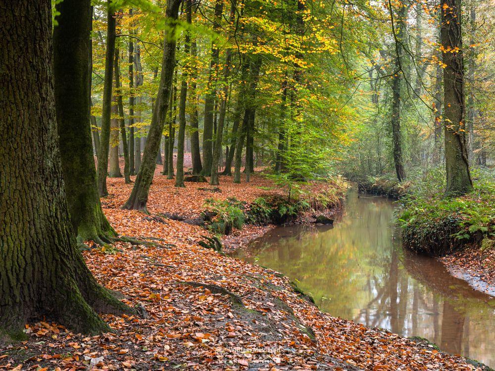 Photo in Nature #geijsteren #venray #limburg #noord-limburg #autumn #trees #brook #mist #geysteren #woods #meandering #colors #forest #landgoed geijsteren #oostrum