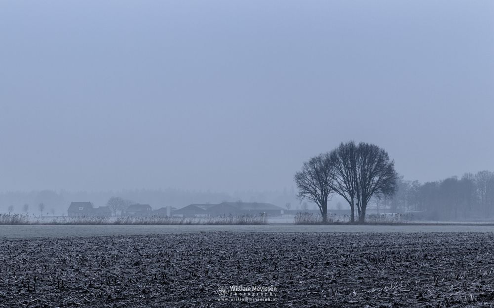 Photo in Landscape #venray #brabander #limburg #noord-limburg #merselo #nature #trees #winter #mist #rural #agriculture #farming