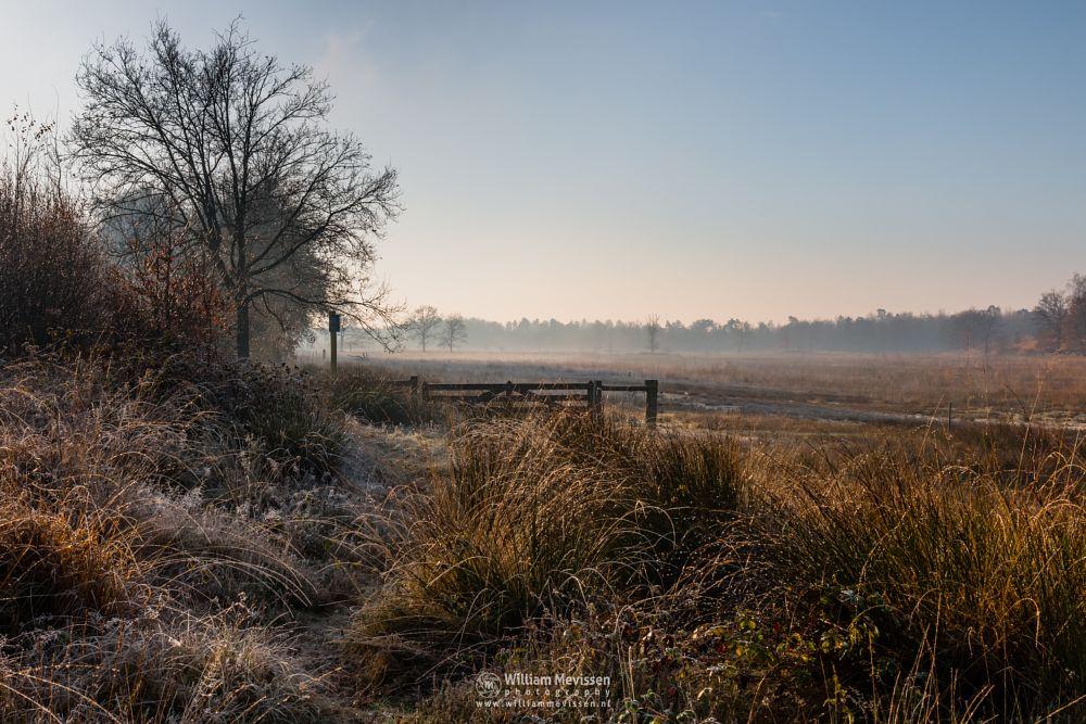 Photo in Landscape #bergerheide #forest #maasduinen #limburg #noord-limburg #nieuw-bergen #bergen #nature #light #mist #mood #frost #surise #winter #fog #gate
