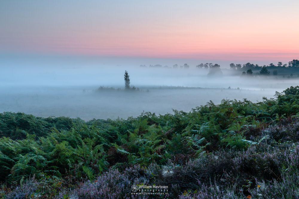 Photo in Landscape #forest #woods #heathland #maasduinen #heather #limburg #noord-limburg #wellerlooi #bergen #nature #light #land #trees #fern #fog #mist #dune #hamert #dehamert #pikmeeuwenwater #twilight