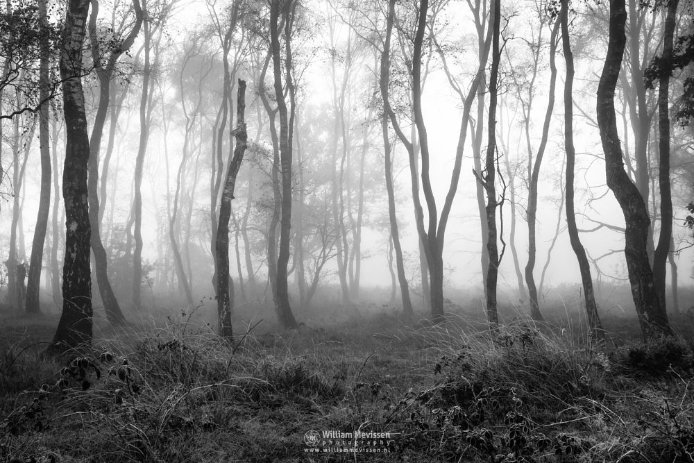 Photo in Random #bergen #limburg #autumn #mist #fog #silhouettes #nature #light #bergerheide #woods #forest #maasduinen #noord-limburg #nieuw-bergen #netherlands
