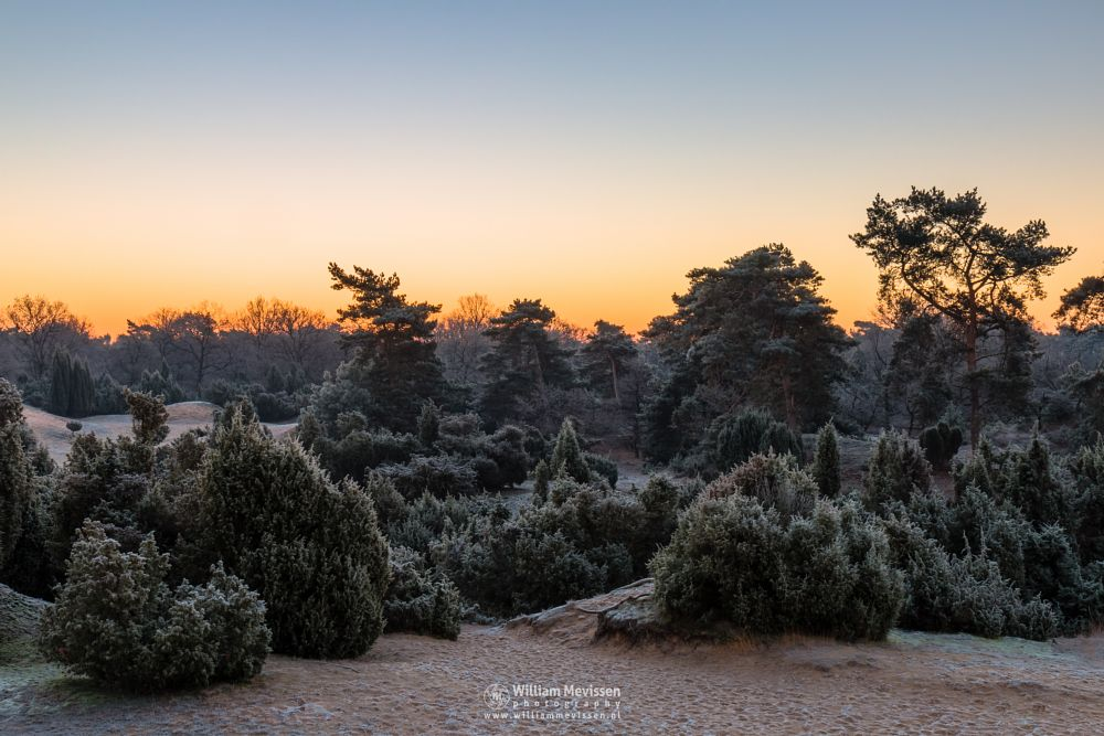 Photo in Landscape #boshuizerbergen #boschhuizerbergen #limburg #noord-limburg #venray #nature #forest #woods #netherlands #pine #sunrise #light #sunlight #juniper #jeneverbes #sanddunes