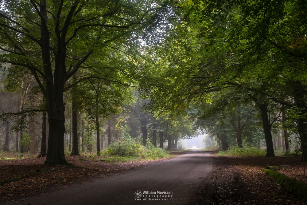 Photo in Nature #mood #fog #mist #street #car #rozendaal #pine #forest #nature #ballonzuilbossen #venray #limburg #autumn #beech #green #merselo #noord-limburg #trees #netherlands