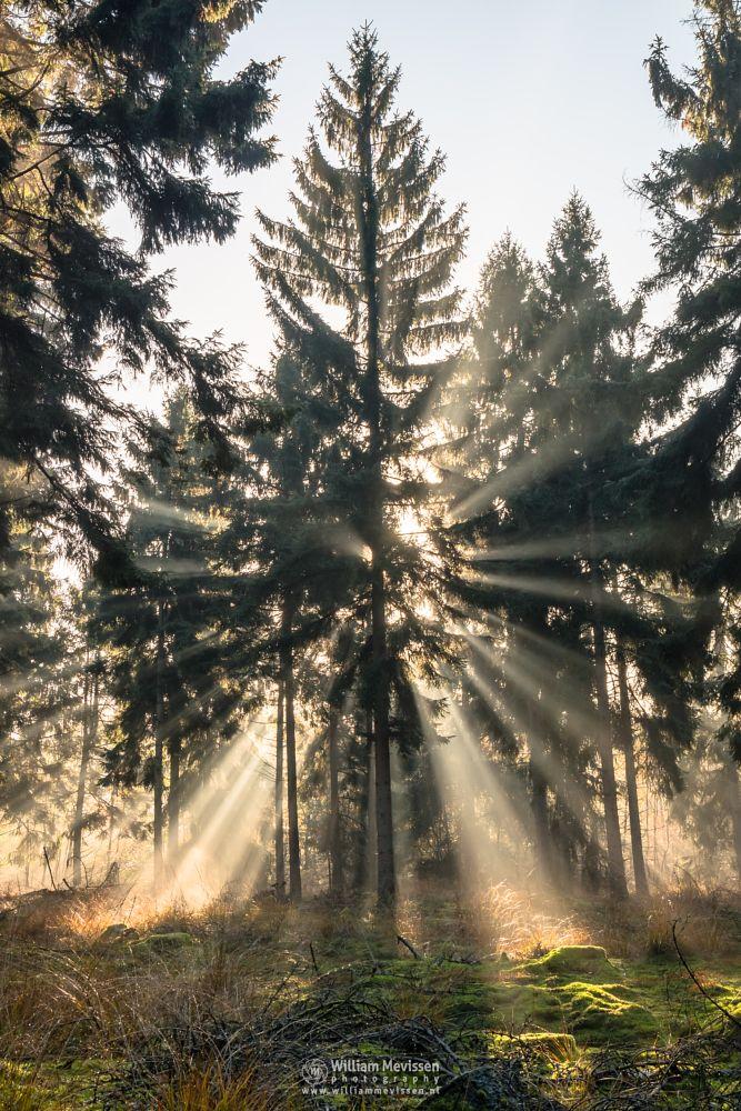 Photo in Random #venray #limburg #merselo #nature #mist #mood #beams #sun #netherlands #sunrays #fog #autumn #woods #forest #rays #ballonzuilbossen #trees #noord-limburg