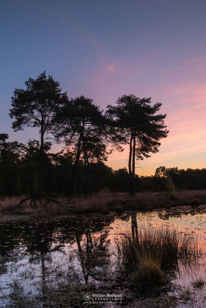 Photo in Nature #ravenvennen lomm limburg no #ravenvennen #lomm #limburg #noord-limburg #arcen #nature #nature reserve #forest #woods #velden #netherlands #venlo #fen #twilight #riverdunes #dune #swamp #mood #silhouette #silhouettes #trees #tree #sunrise