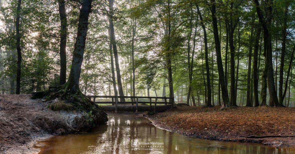Photo in Landscape #geijsteren #limburg #oostrum #venray #landgoed geijsteren #landgoed #noord-limburg #nature #nature reserve #woods #forest #geysteren #light #tree #trees #path #mist #fog #trunk #bridge