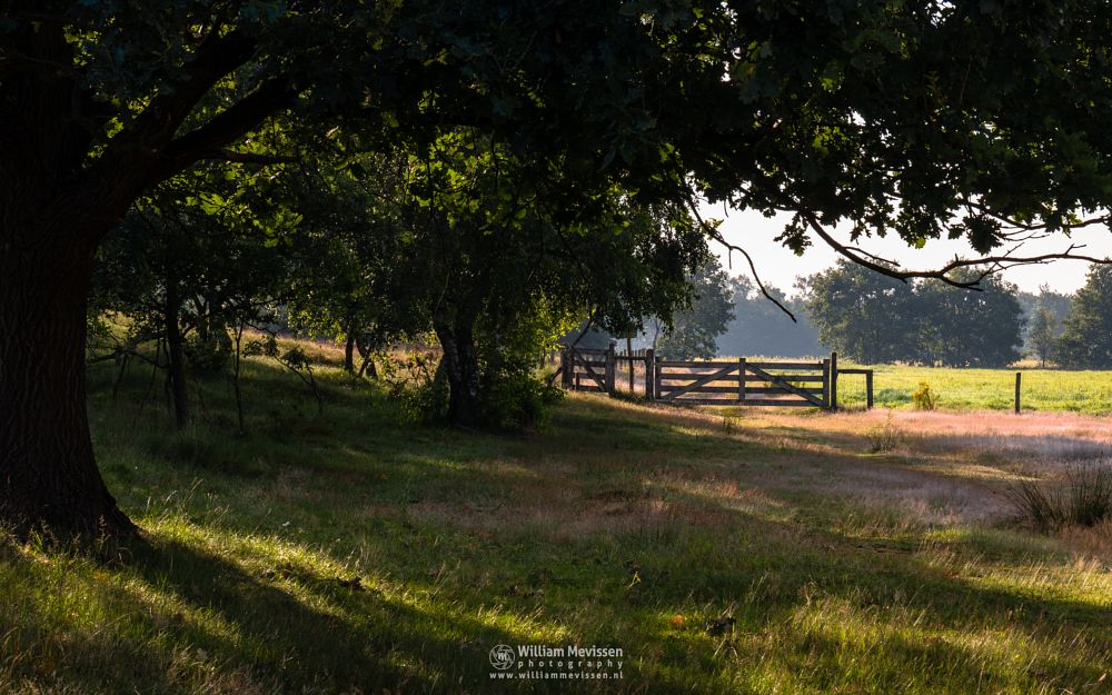 Photo in Nature #bergerheide #forest #heathland #maasduinen #limburg #noord-limburg #nieuw-bergen #bergen #national park #nature #sand #dunes #sanddunes #land #path #silhouettes #trees #gate #silhouette #fence