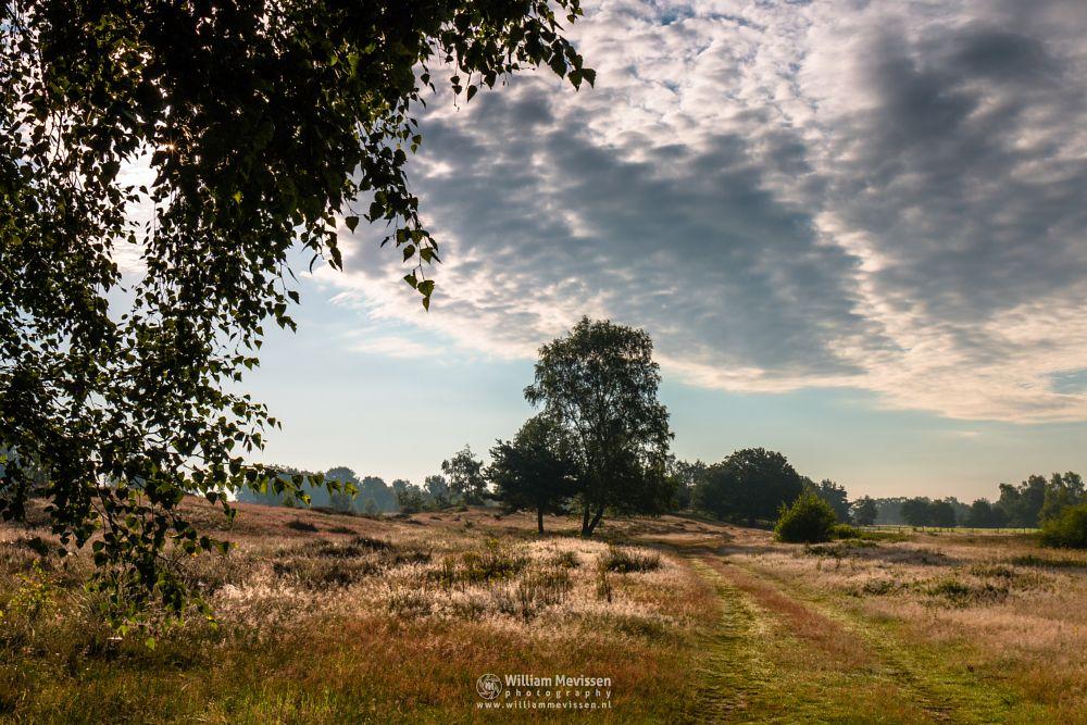 Photo in Landscape #bergerheide #forest #woods #heathland #maasduinen #limburg #noord-limburg #nieuw-bergen #bergen #national park #nature #sand #dunes #sanddunes #light #land #path #trees #clouds #sky #cloudy #sun #foliage