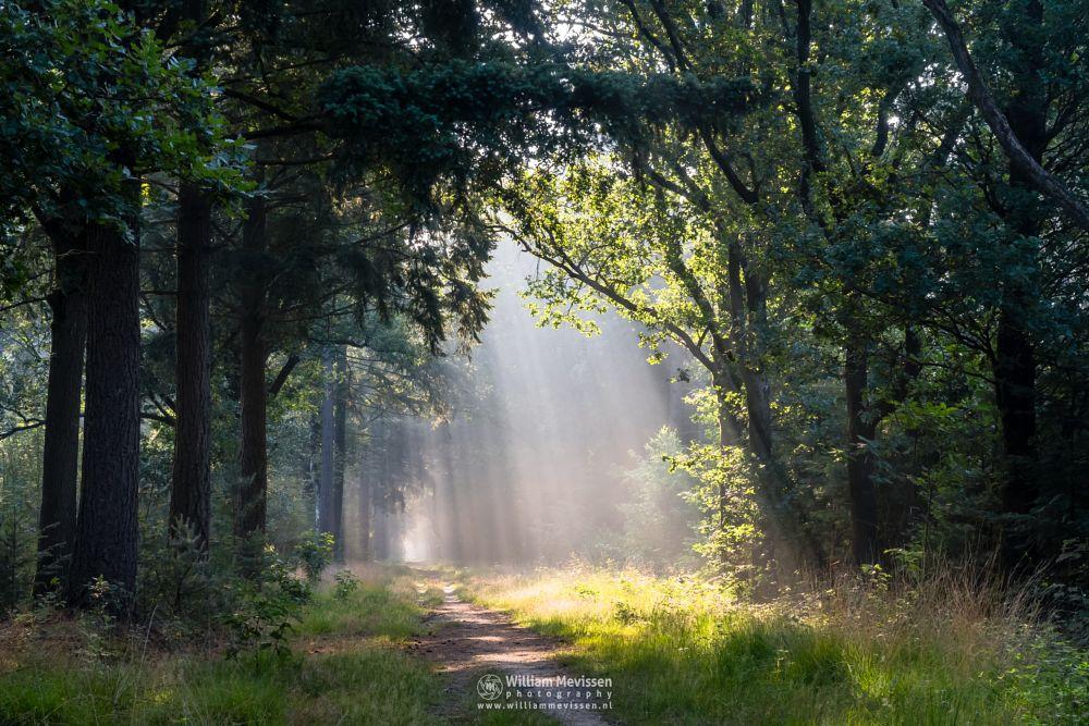 Photo in Nature #venray #limburg #noord-limburg #ballonzuilbossen #merselo #nature #trees #netherlands #forest #woods #lightrays #sunlight #rays #mood