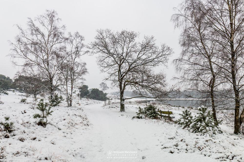 Photo in Landscape #limburg #bergen #winter #snow #path #trees #bench #wintermood #nature #bergerheide #nieuw-bergen #noord-limburg