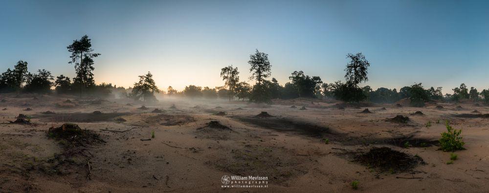 Photo in Landscape #boshuizerbergen #boschhuizerbergen #limburg #noord-limburg #venray #nature #nature reserve #forest #woods #juniper #juniper thickets #sand #shifting sand #moss #limburgs landschap #netherlands #pine #pine forest #sunrise #misty #mist #fog #foggy #mystic #pano #panorama
