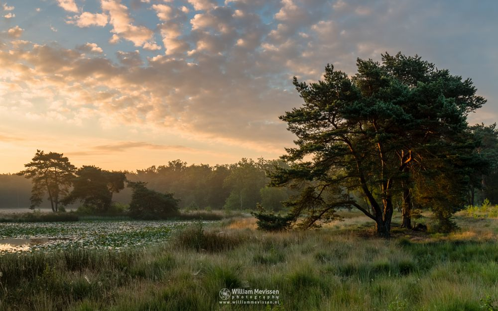 Photo in Landscape #ravenvennen #lomm #limburg #arcen #nature #forest #velden #netherlands #venlo #sunrise #swamp #silhouette #trees