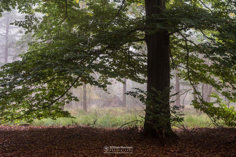 Photo in Nature #venray #limburg #merselo #noord-limburg #netherlands #forest #nature #trees #ballonzuilbossen #mood #mist #fog #silhouettes #pine #woods #autumn #green #beech