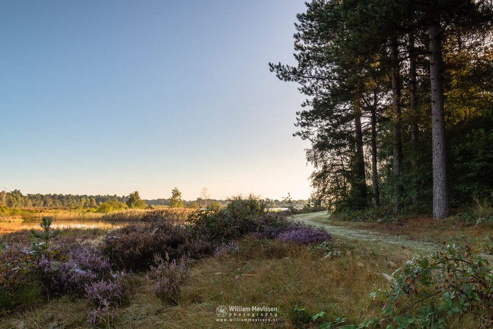 Photo in Landscape #maasduinen #green #colors #serene #view #light #mood #woods #forest #heather #fen #noord-limburg #reindersmeer #limburg #lake #birch #trees #nature #mist #well