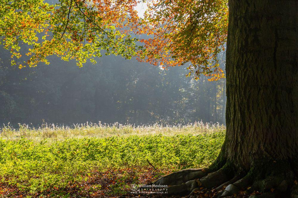 Photo in Nature #geijsteren #venray #oostrum #landgoed geijsteren #limburg #noord-limburg #nature #forest #woods #autumn #tree #trees #sun
