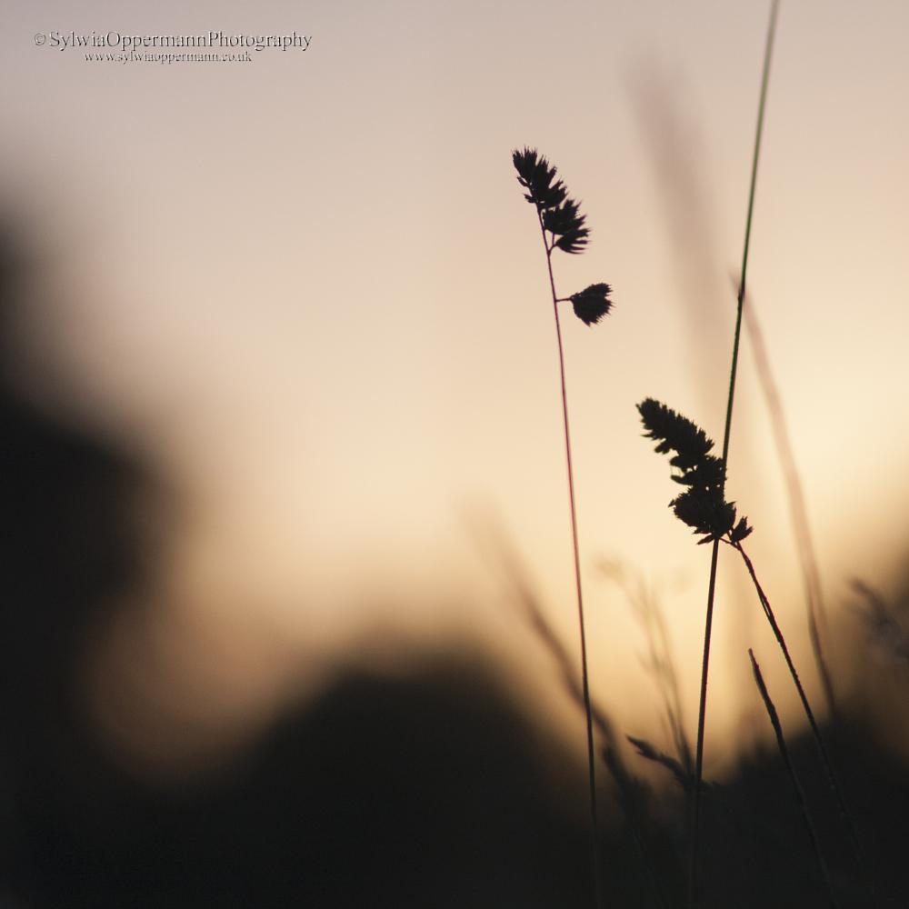 Photo in Random #nature #meadow #sunrise #grass #silence