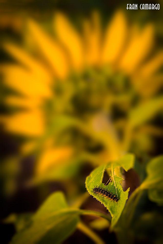 Photo in Rural #caterpillar