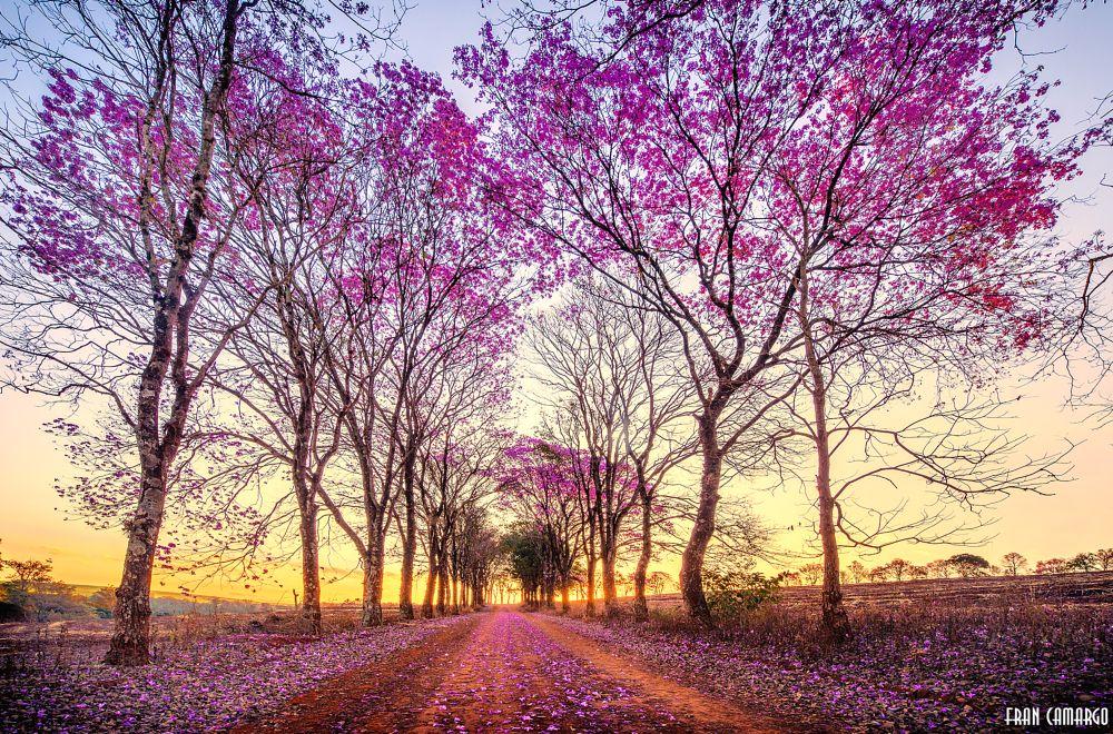 Photo in Landscape #spring