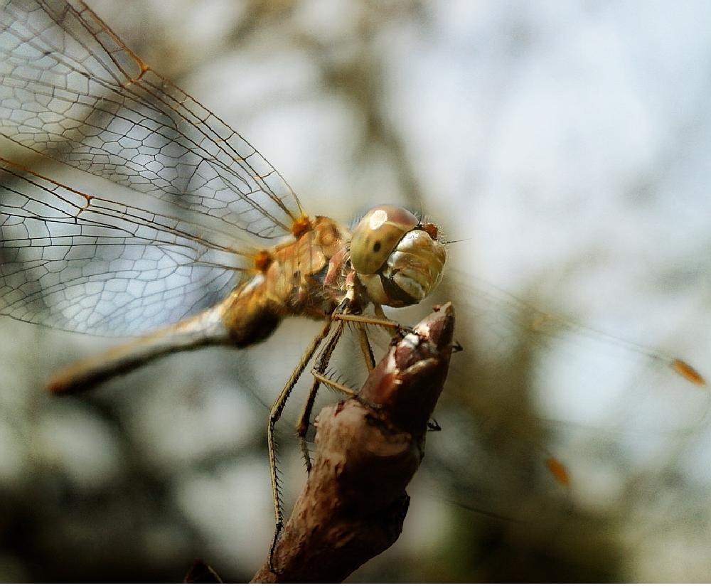 Photo in Macro #macro #animals #insect #garden