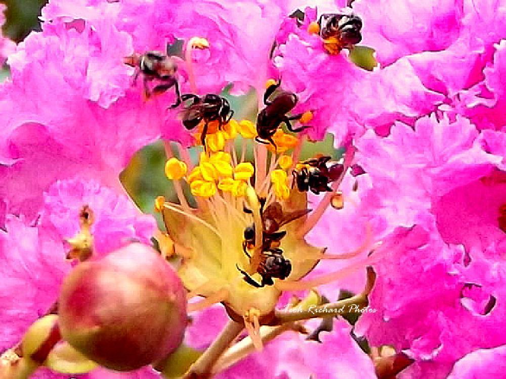 Photo in Macro #bees #nectar #macro