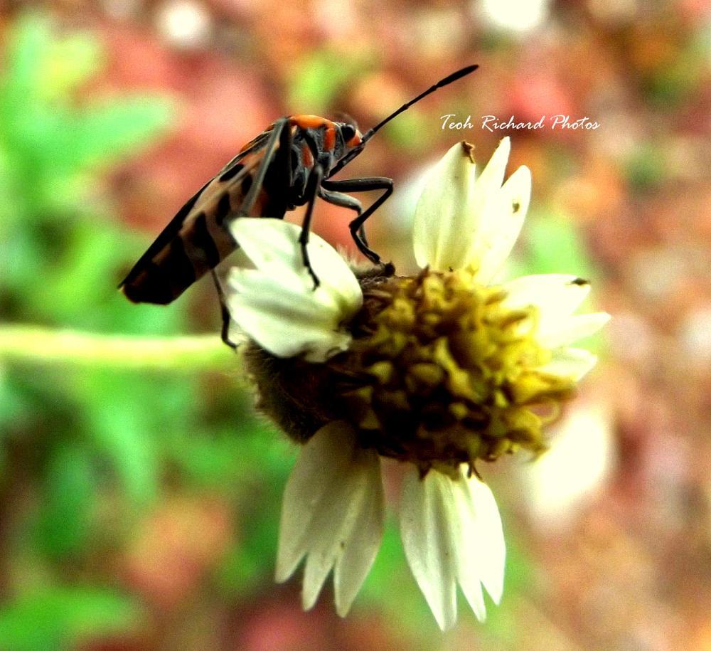 Photo in Macro #bugs #flower #macro
