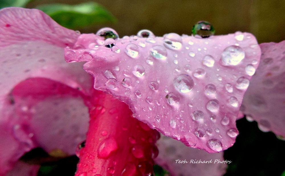 Photo in Nature #nature #macro #flora