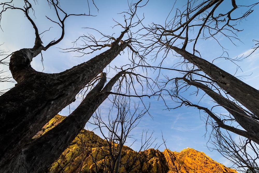 Photo in Nature #trees #branches #mountains #witteberg mountains #karoo