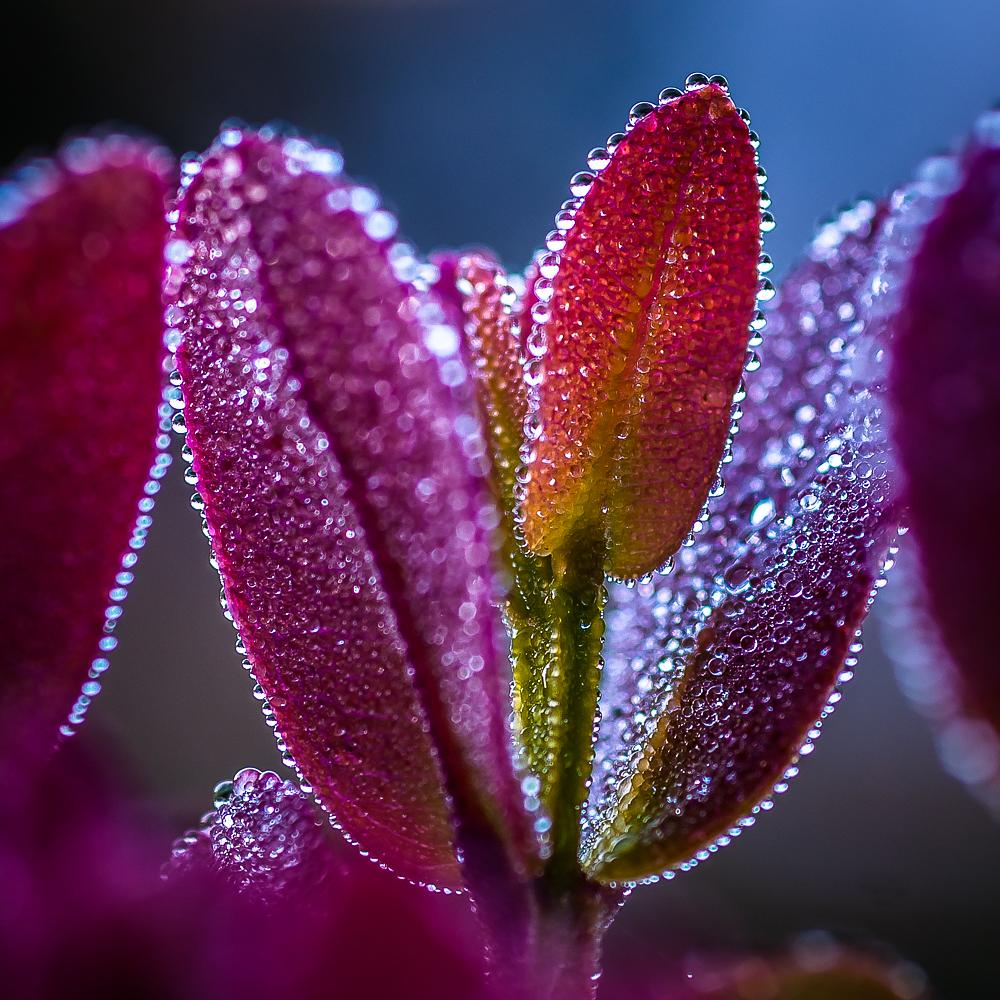 Photo in Nature #leaves #dew #water #drops