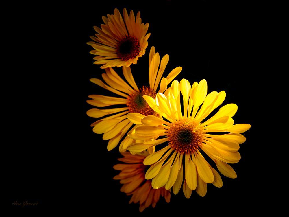 Photo in Macro #flower #dark #light #yellow #marco #canon #650d #nature #flora #plant