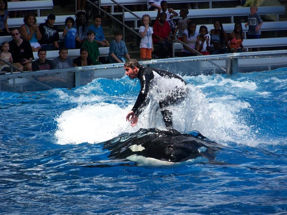 Photo in Animal #orca #water #ride #fish
