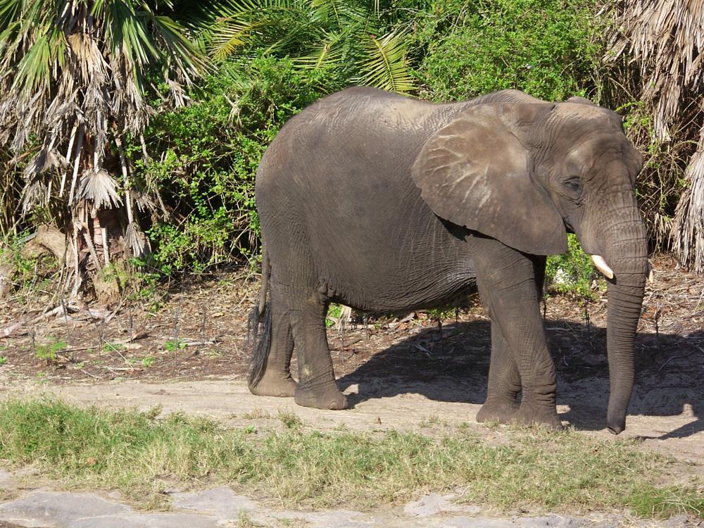 Photo in Animal #animal #big #zoo