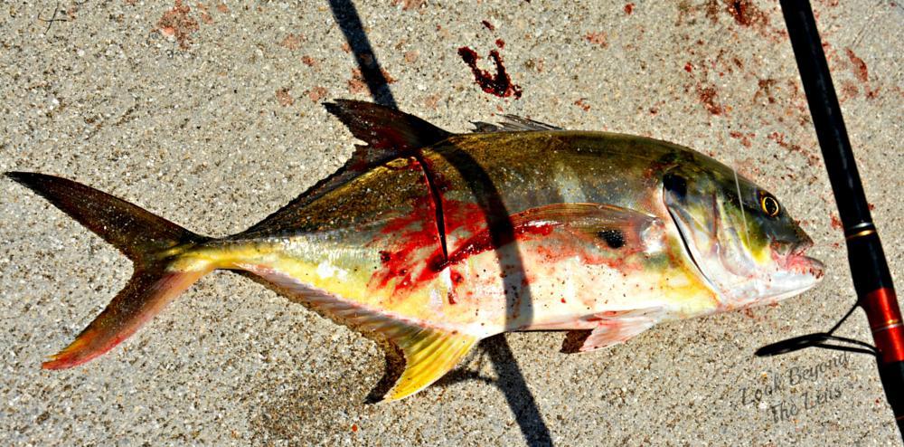 Photo in Animal #fish #freshcatch #fishing