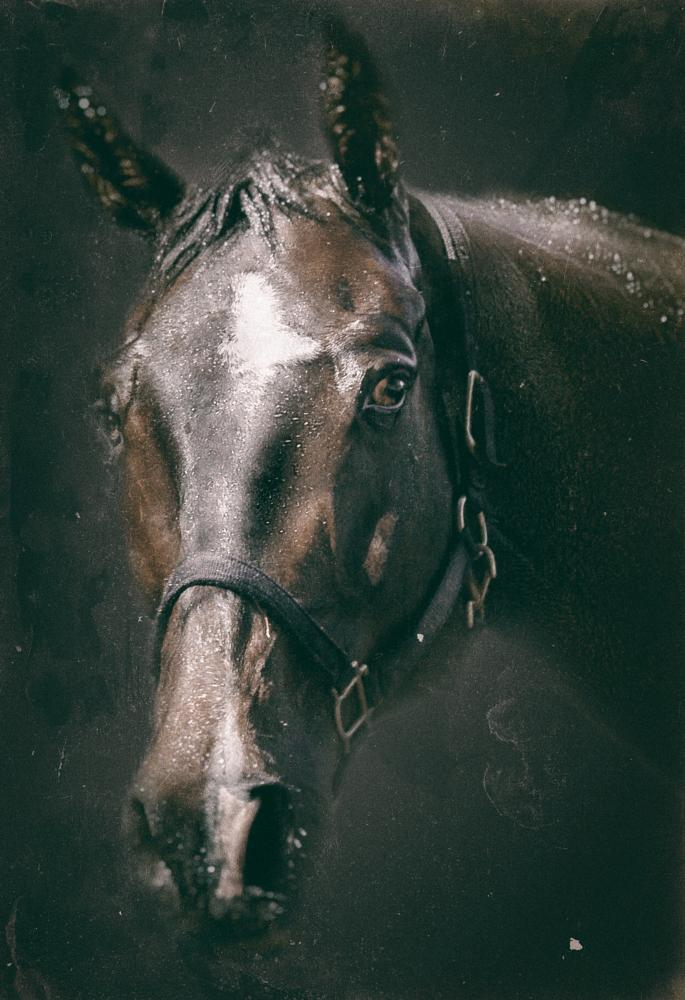 Photo in Animal #horse #stallion #portrait