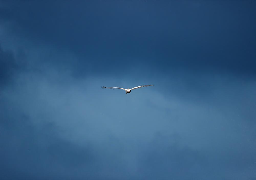 Photo in Travel #bird #pelican #sky #blue