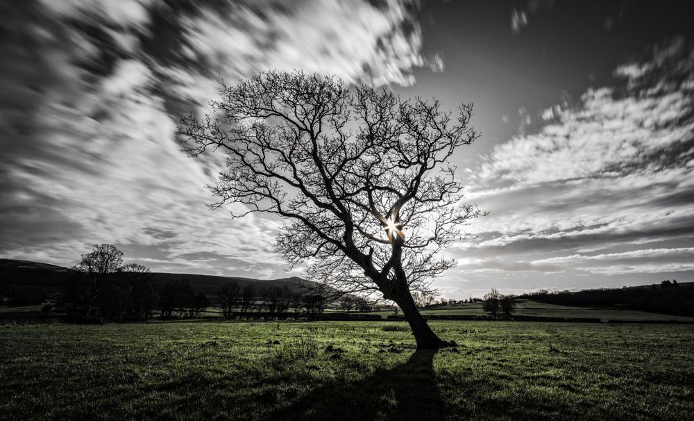 Photo in Landscape #tree #sunburst #field #grass #green #sky