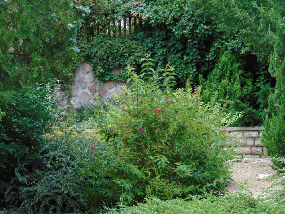 Photo in Nature #balatonfüred #park
