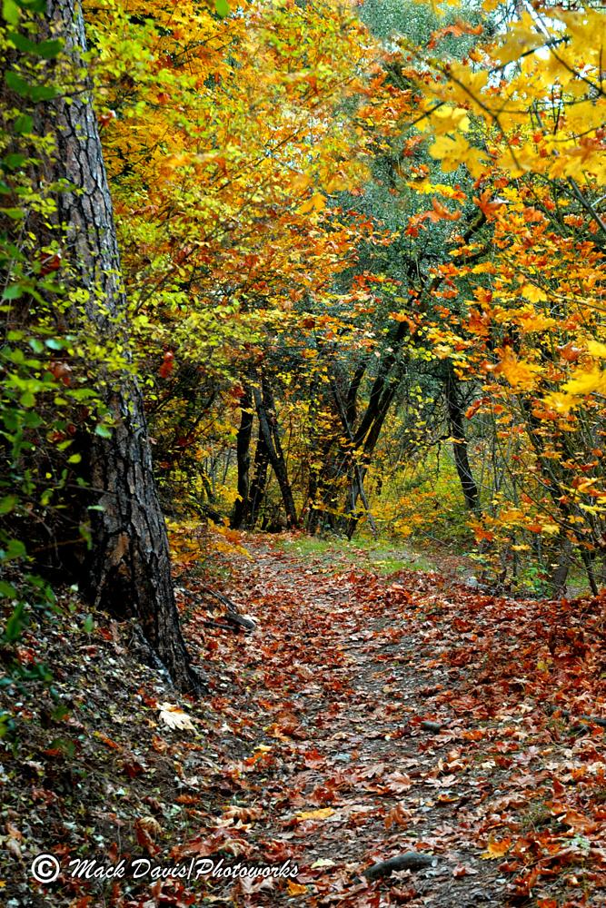 Photo in Landscape #fall #trees #color #trails #nature