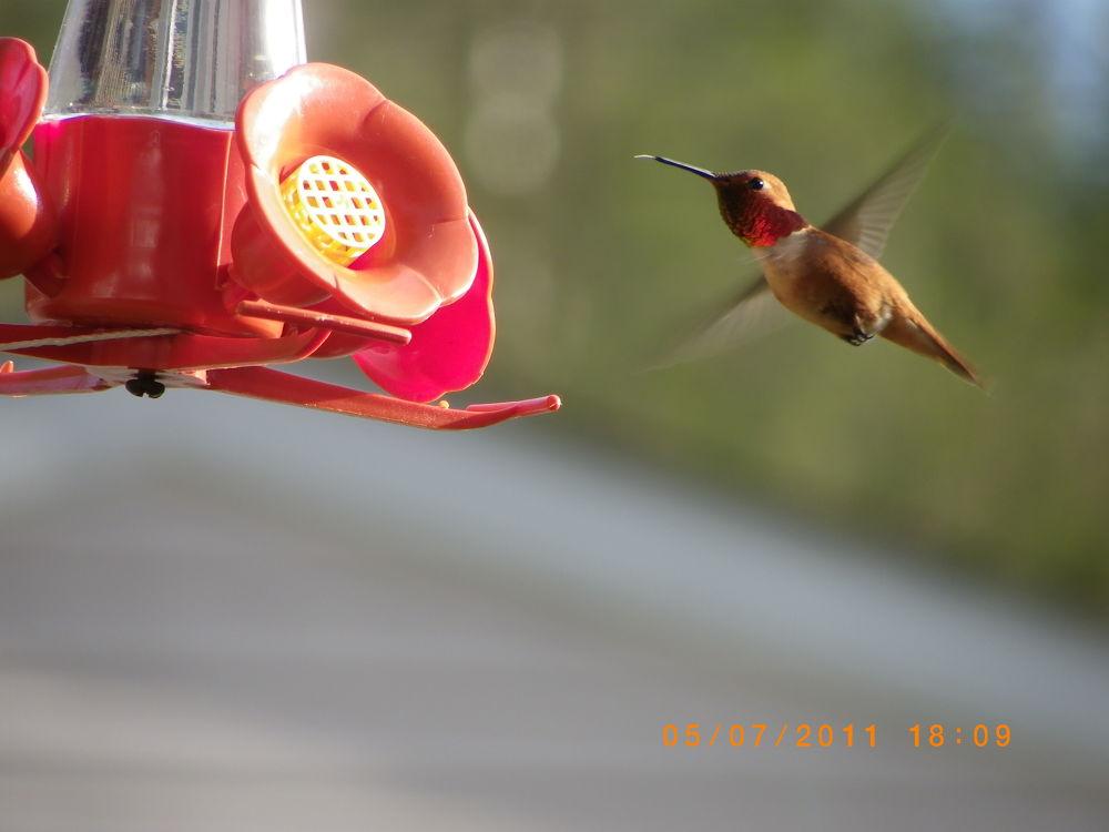 Photo in Random #humming bird