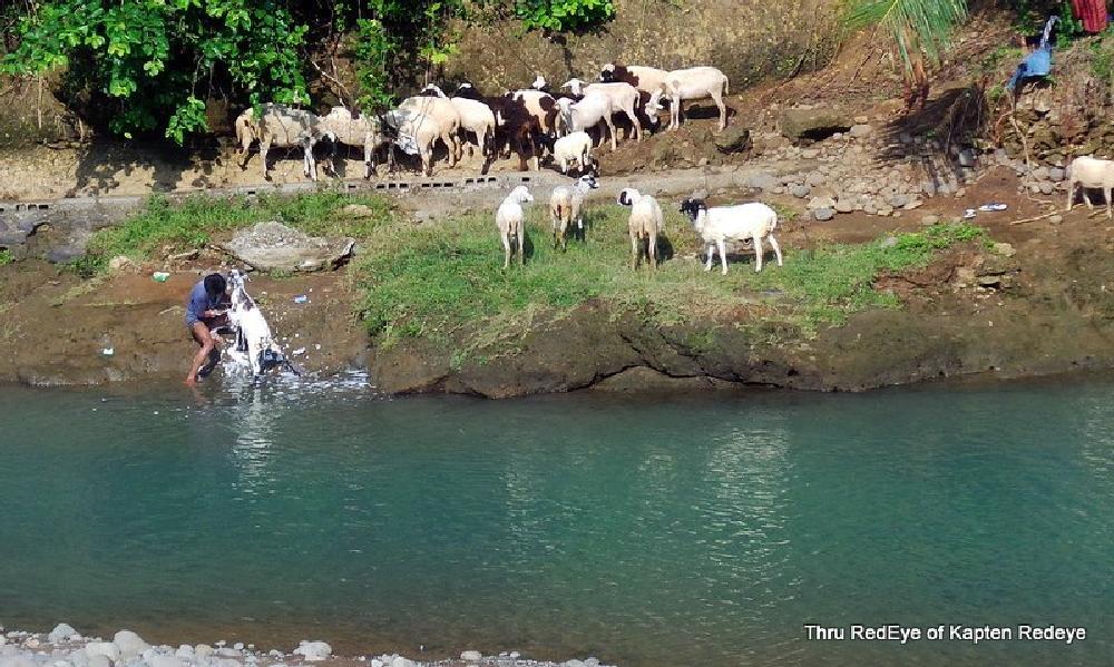 Photo in Street Photography #redeye guide #goat #shower #jabar